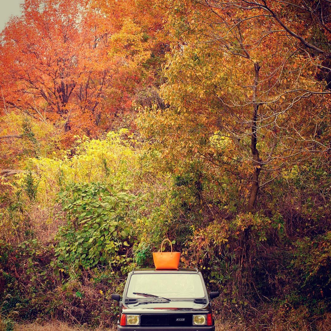 トートをもって紅葉を見に行ってきました