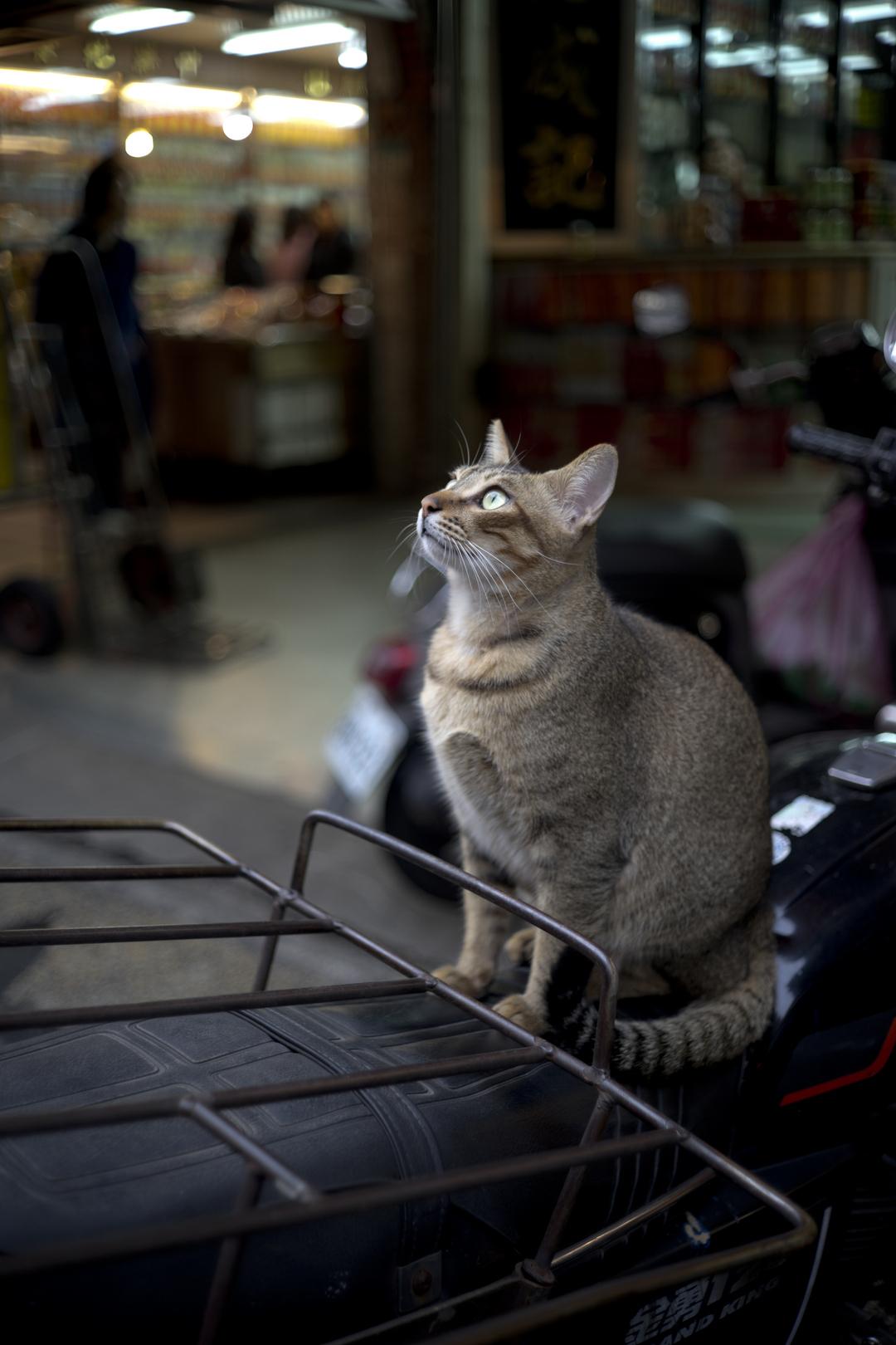 台湾を撮る(動物) ―M-ROKKOR 40mm f2 ライカMマウント―
